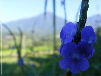 Bunga rumput indah